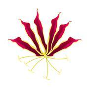 Flame Lily or Gloriosa Superba Flower on White Background Stock Illustration