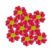 Red Yarrow Flowers or Achillea Millefolium Flowers - stock illustration