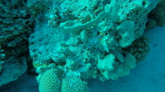 Nudibranch in clear Red Sea water Egypt Stock Footage
