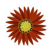 Stock Illustration of Elegant Perfect Red Sunflower on White Background