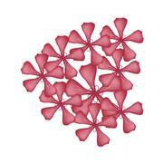 Red Rose Geranium Flowers or Pelargonium Graveolens Flowers - stock illustration