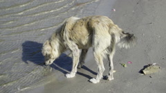 Stray dog drinking water from river Stock Footage