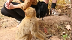 Monkey and tourist in Morocco near Ouzoud Stock Footage