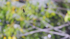 Large spider in web in wild jungle Stock Footage