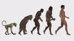 Stock Video Footage of Evolution, the classic scheme, animation, white background
