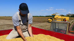 Farmer with cupped hands holding soybeans grains in his hand - stock footage