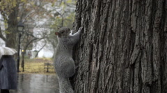 squirrel hanging out NYC tree on gloomy rainy fall day in Washington Square Park - stock footage