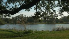 Reveal from old oak tree to lake in City Park New Orleans Stock Footage