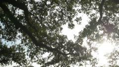 Slow motion tilt to sun lit oak tree City Park New Orleans Stock Footage