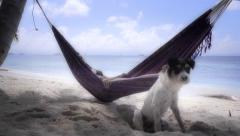 Woman on hammock with dog Stock Footage