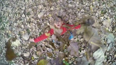 Child throwing leaves into the air, SLOW MOTION AERIAL SHOT - stock footage