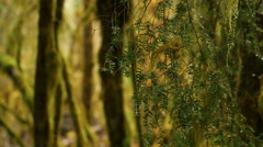 Hoh Rainforest, Olympic National Park Stock Footage