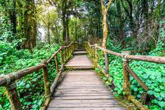 Wooden footpath nature trail at Doi Inthanon National Park in Chiang Mai, Tha - stock photo