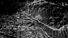 Creepy hand HORROR movie creep weird spooky halloween 2 Stock Footage