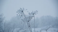 Winter scene - stock footage