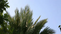 Palm tree going to blur - stock footage