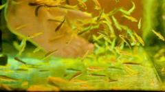 Peeling skin feet of tropical fish in the SPA aquarium Stock Footage
