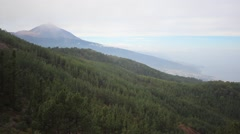 Pine forest valley and mountain in background -  Pico del Teide, Tenerife Stock Footage