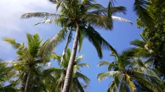 Palmtrees in the sky of Montezuma Costa Rica Stock Footage