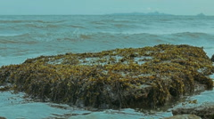 Closeup view at the stone with seaweed - stock footage