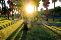 Sunny summer park with palm trees and green grass Stock Photos