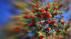 Fantasy sunlit rowan tree with red berries on unusual defocused background Stock Footage