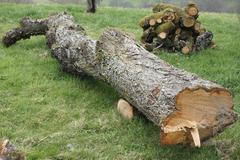 Firewood lying upon another close up - stock photo