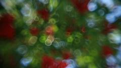 Wonderful diagonal pan of defocused green foliage and red berries of rowan tree Stock Footage