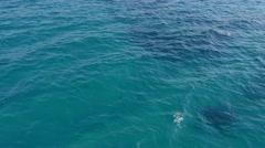 Prado beach, Marseille, France by drone Stock Footage