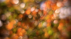 Fantasy colored soft bubbles of defocused autumn tree foliage, trembling in wind - stock footage