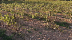 Vineyards and Mont Sainte-Victoire mountain Stock Footage