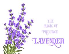 The lavender elegant card - stock illustration