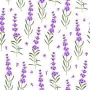 Seamless pattern of lavender flowers - stock illustration