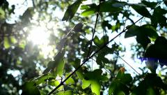 View of the detail of branch with leaves in the park - sun shining  Stock Footage