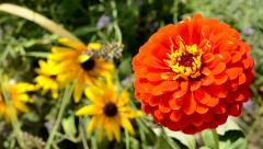 View of the orange flower and another plants in the garden - macro - windy day Stock Footage