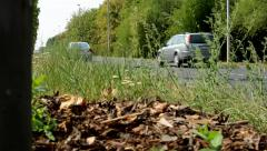 Little tree stands on the side of the road in the nature - cars pass  Stock Footage