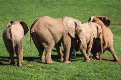 Stock Photo of Elephants family on African savanna. Safari in Amboseli, Kenya, Africa