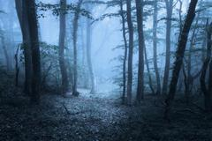 Spring forest in fog. Beautiful natural landscape. Vintage style Stock Photos