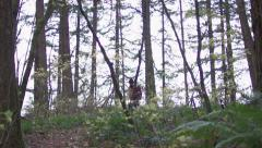 Hiker walks down a trail with his gear Stock Footage