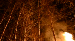 Bonfire in winter night lights up birch tree forest Stock Footage