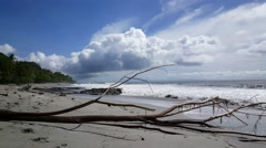 Big pieces of wood at Montezuma beach in Costa Rica Stock Footage