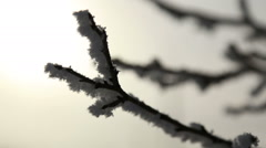 The branches of a tree in morning frost in winter Stock Footage