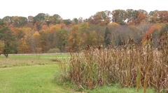 Fall colored trees in Ohio park with cattails in foreground - stock footage
