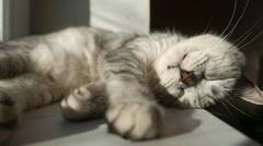 The cat sleeps on the windowsill - stock footage