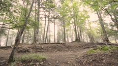 Trail runner at Mount Daibosatsu in summer, Yamanashi Prefecture Stock Footage