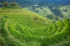 Longji rice terraces - stock photo
