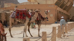 Camels  waiting for tourists, Egypt cairo Stock Footage
