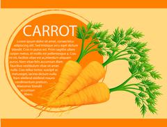 Infographic design with fresh carrots - stock illustration