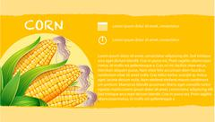 Infographic with corn on the cob - stock illustration