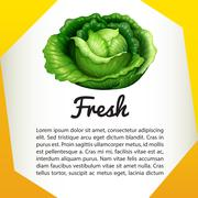 Infographic with fresh cabbage Stock Illustration